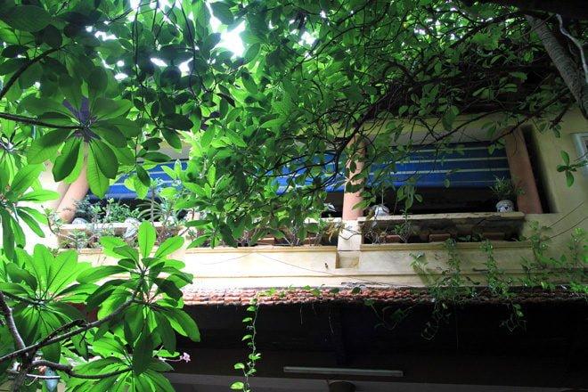 n29 1408338439 660x0 Nhà vườn 70 năm tuổi giữa phố cổ Hà Nội qpdesign