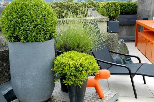 san thuong 5 12 mẫu thiết kế vườn sân thượng tuyệt đẹp qpdesign