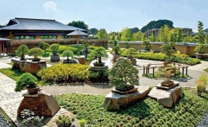 Cách trang trí sân vườn cực đẹp với cây bonsai