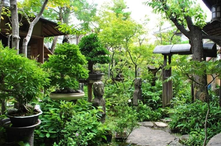 san vuon bonsai 6