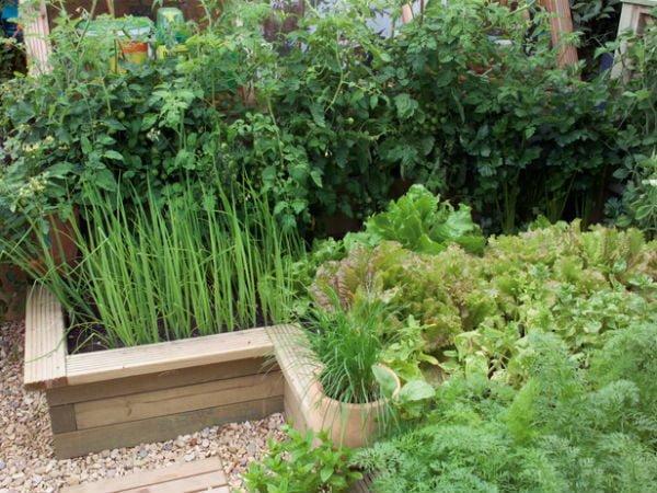 làm đẹp sân vườn 1