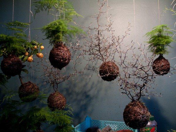 18 Một số ý tưởng làm vườn treo độc đáo cho ngôi nhà của bạn qpdesign