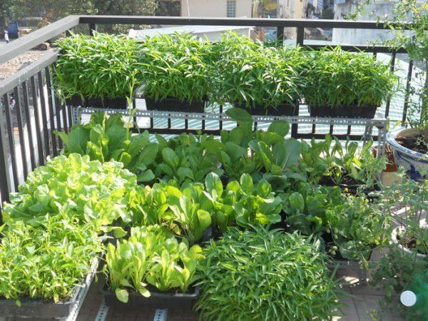 29 Trồng rau để làm đẹp sân vườn qpdesign