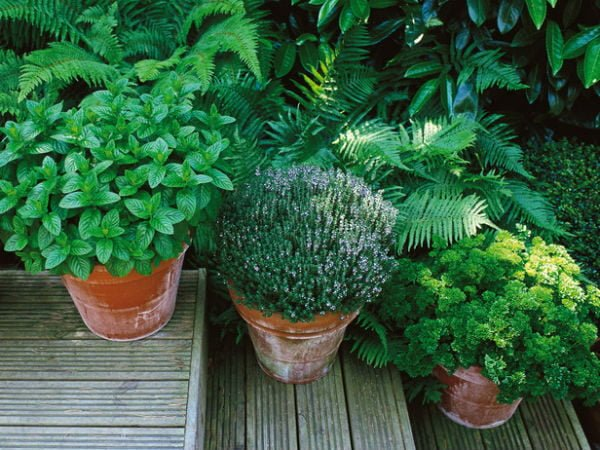 39 Trồng rau để làm đẹp sân vườn qpdesign