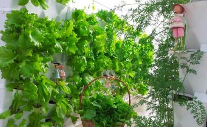 Một số ý tưởng làm vườn treo độc đáo cho ngôi nhà của bạn