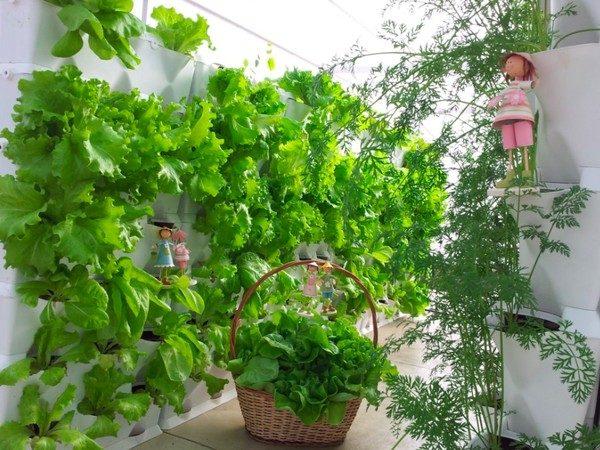 55 Một số ý tưởng làm vườn treo độc đáo cho ngôi nhà của bạn qpdesign