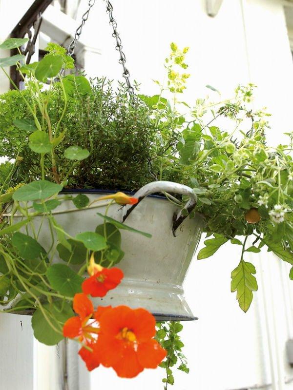 59 Trồng rau để làm đẹp sân vườn qpdesign