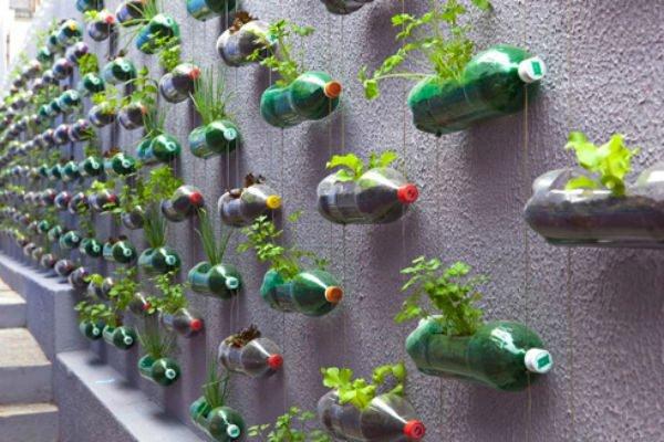 79 Trồng rau để làm đẹp sân vườn qpdesign