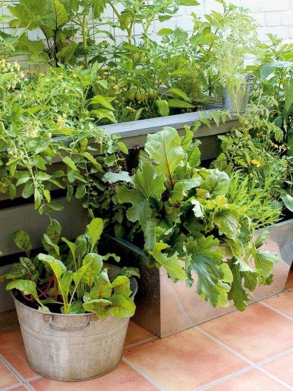 89 Trồng rau để làm đẹp sân vườn qpdesign