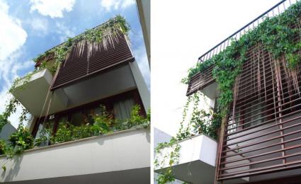 Ngắm nhà đẹp thoáng đãng ngập tràn cây xanh