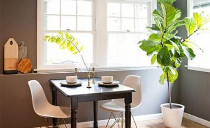 Lời khuyên hữu ích giúp cây trong nhà luôn xanh tốt