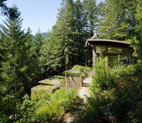 713 Cabin nhỏ trong rừng được bao phủ bởi cây xanh tại California qpdesign