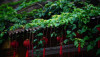 a 5 1438740657 1200x0 100x57 Những mái hiên nở hoa đầy quyến rũ ở Hội An qpdesign