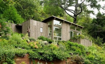 Cabin nhỏ trong rừng được bao phủ bởi cây xanh tại California