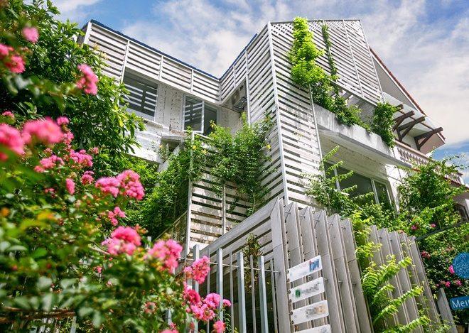 3 Cải tạo nhà 3 tầng thành khu vườn xanh mướt qpdesign