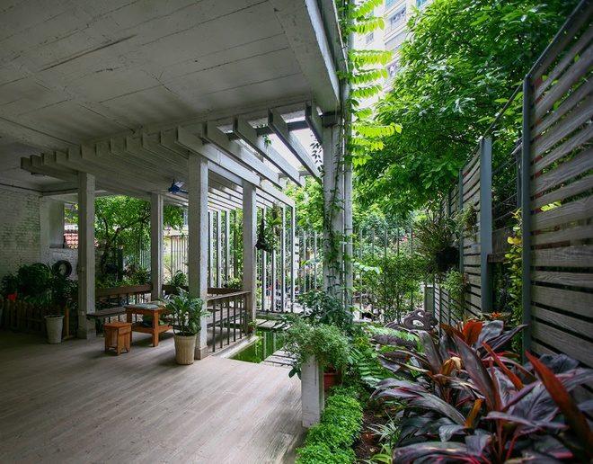 8 Cải tạo nhà 3 tầng thành khu vườn xanh mướt qpdesign