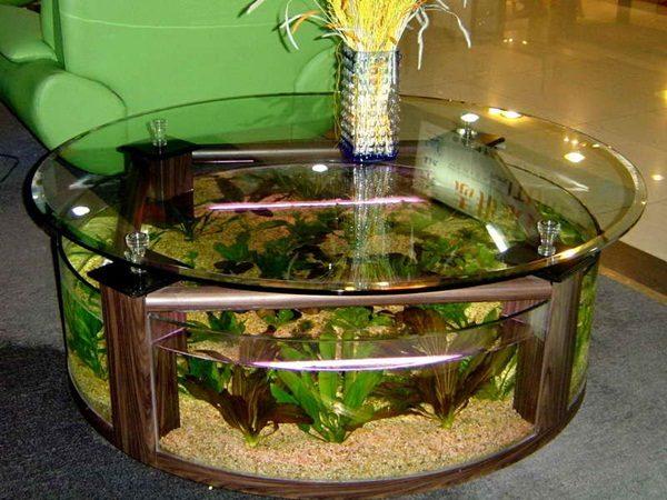 bể cá 8