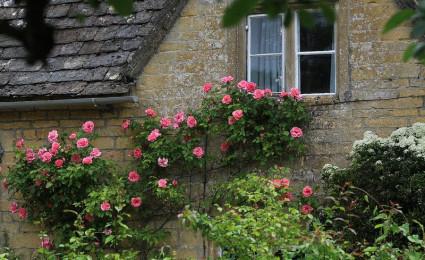Những ngôi nhà phủ toàn hoa hồng