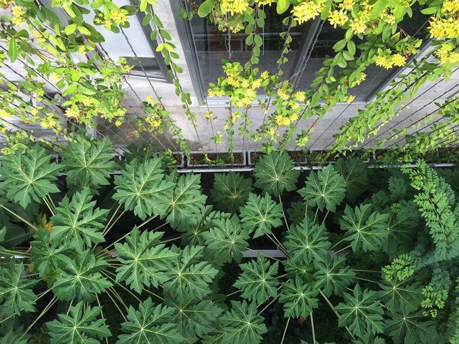 11 1 1449037561 1200x0 Ngôi nhà tại Singapore với không gian xanh dịu mát qpdesign