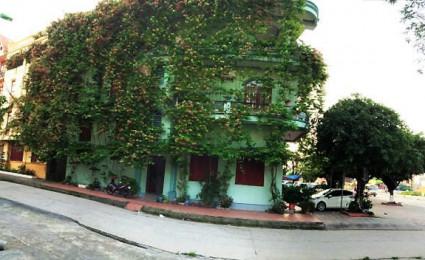 Ấn tượng ngôi nhà 3 mặt tiền với giàn cây bao phủ toàn bộ ở Quảng Ninh