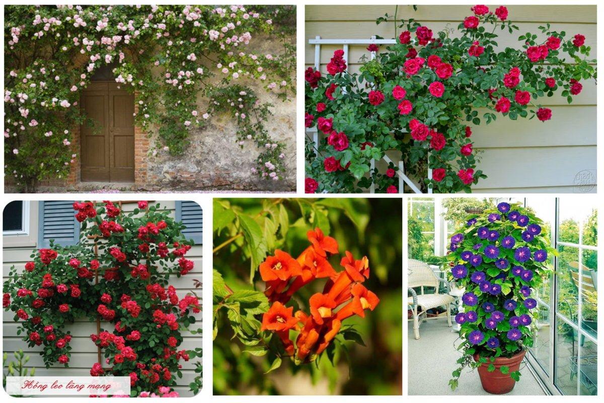 Ngôi nhà nên thơ và mát rười bởi giàn hoa leo 1