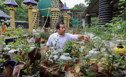 Bộ sưu tập hơn 5.600 bonsai 'tí hon' ai xem cũng phải mê